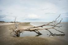 Sapelo's Cabretta Beach, by Imke Lass